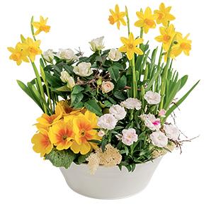 Bouquet de fleurs Gourmandise