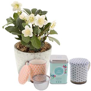 Fleurs et cadeaux Hellebore en pot et son thé zen detox Le Comptoir français + 2 tasses
