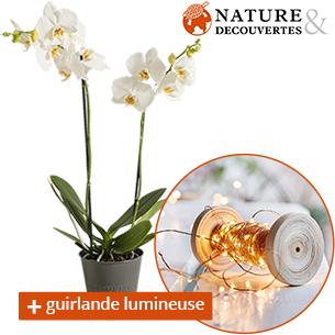 Fleurs et cadeaux Orchidée et sa guirlande lumineuse Nature & Découvertes