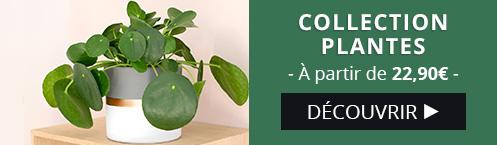 Découvrez notre collection de plantes