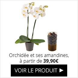 Orchidée et ses amandines