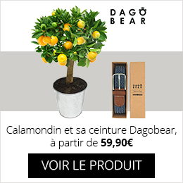 Calamondin et sa ceinture Dagobear