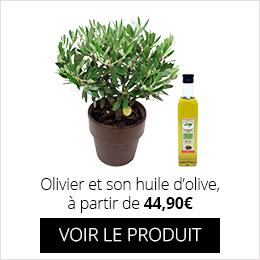 Olivier et son huile d'olive