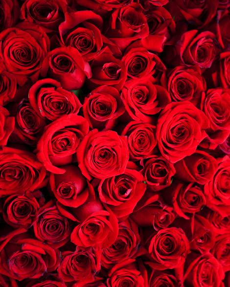 Bouquet de roses rouges