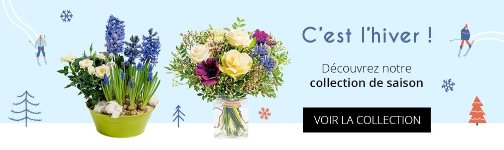Collection fleurs hivernales