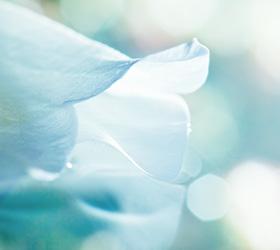 Idées de messages de condoléances