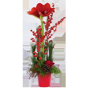 Bouquet de roses Sous le sapin Noël