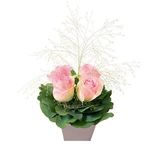 Bouquet de roses Poudré Amour