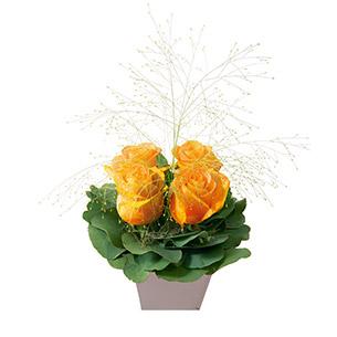 Bouquet de roses Poudré orange Anniversaire