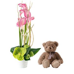 Composition florale Caprice et l'ourson Harry ourson