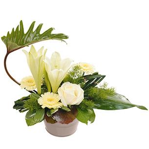 Composition florale Chou Anniversaire