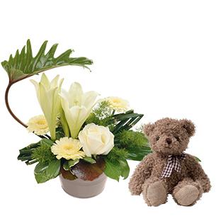 Fleurs et cadeaux Chou et l'ourson Harry ourson