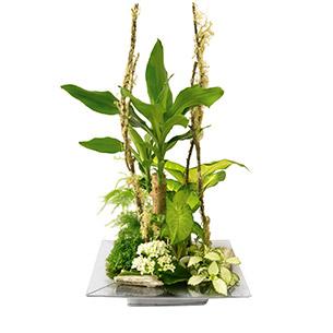 Plantes vertes et fleuries Allure Mariage invité