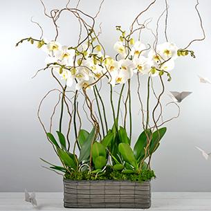 Plantes vertes et fleuries Alba Mariage invité