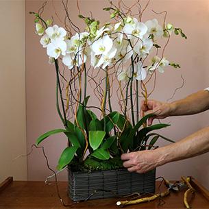 Plantes vertes et fleuries Alba Collection Hommes