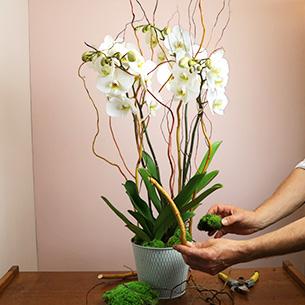 Plantes vertes et fleuries Bianca Collection Hommes