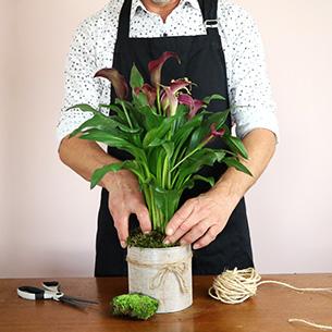 Plantes vertes et fleuries Calla Remerciements