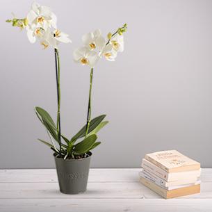 Bouquet de fleurs Candide Anniversaire