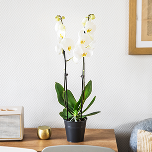 Plantes vertes et fleuries Candide Deuil