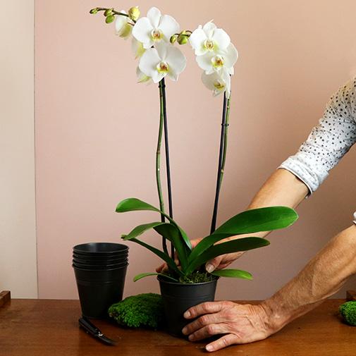 Plantes vertes et fleuries Candide