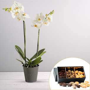Plantes vertes et fleuries Candide et ses amandes au chocolat Collection Hommes