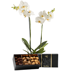 Plantes vertes et fleuries Candide et ses amandes au chocolat Collection Homme Gourmand