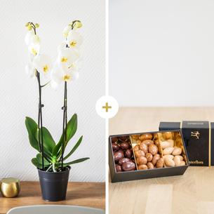 Plantes vertes et fleuries Candide et ses amandes au chocolat Fête du chocolat