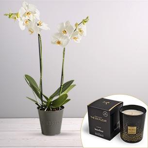 Plantes vertes et fleuries Candide et sa bougie parfumée Esteban