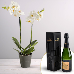 Plantes vertes et fleuries Candide et son champagne Devaux Collection Hommes
