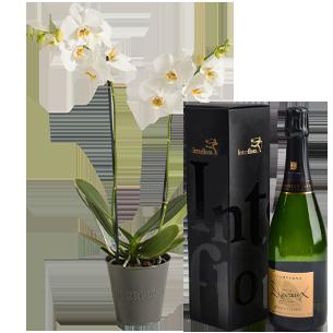 Plantes vertes et fleuries Candide et son champagne Devaux Collection Homme Festif