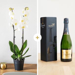 Plantes vertes et fleuries Candide et son champagne Devaux