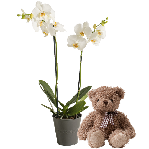 Plantes vertes et fleuries Candide et son ourson Harry