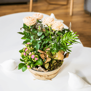 Plantes vertes et fleuries Coin de paradis Collection Homme Trendy