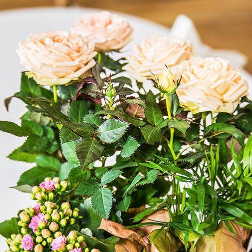 Plantes vertes et fleuries Coin de paradis et ses amandes au chocolat