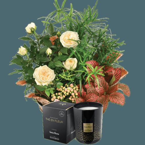 Plantes vertes et fleuries Coin de paradis et sa bougie parfumée Esteban