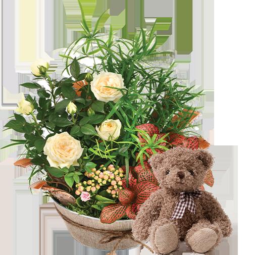 Plantes vertes et fleuries Coin de paradis et son ourson Harry
