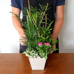 Plantes vertes et fleuries Déclic Anniversaire