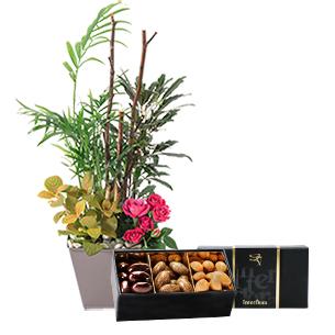 Bouquet de fleurs Déclic et son écrin d'amandes gourmandes Collection Hommes