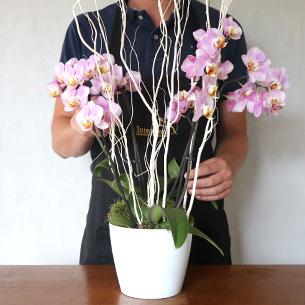 Plantes vertes et fleuries Divine Naissance