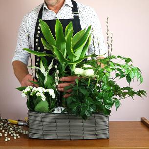 Plantes vertes et fleuries Jardin d'eden Collection Hommes