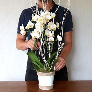 Plantes vertes et fleuries Lilou Anniversaire