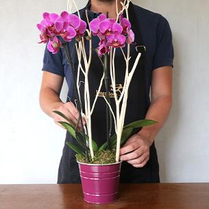 Plantes vertes et fleuries Lola Anniversaire