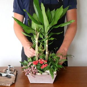Plantes vertes et fleuries Mikado Anniversaire
