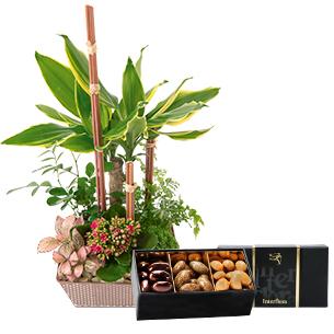 Fleurs et cadeaux Mikado et ses amandes au chocolat Anniversaire