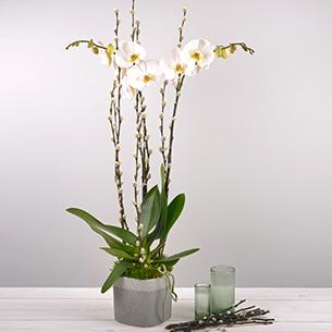 Plantes vertes et fleuries Nacre Mariage invité