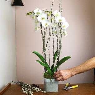 Plantes vertes et fleuries Nacre Collection Hommes