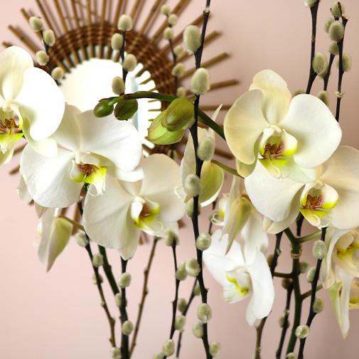 Plantes vertes et fleuries Nacre