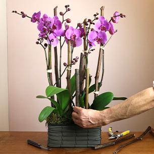 Plantes vertes et fleuries Parma Collection Hommes