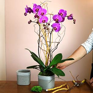 Plantes vertes et fleuries Purple Collection Hommes