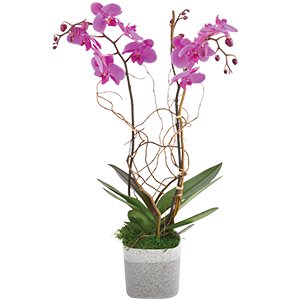 Plantes vertes et fleuries Purple